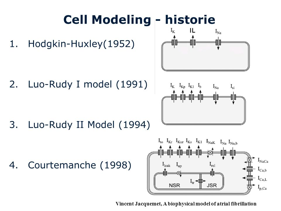 Cell Modeling - historie