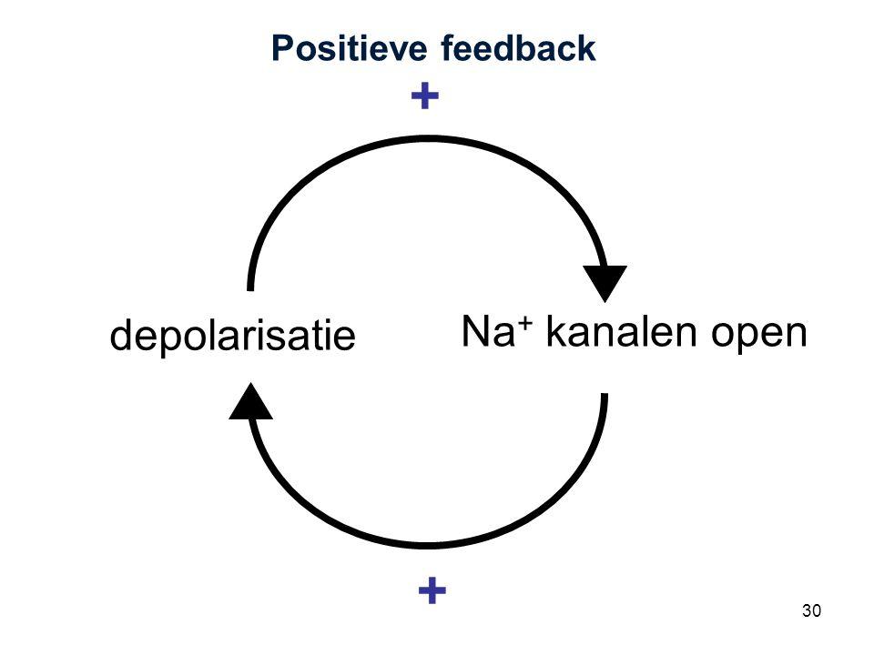 Positieve feedback + depolarisatie Na+ kanalen open +