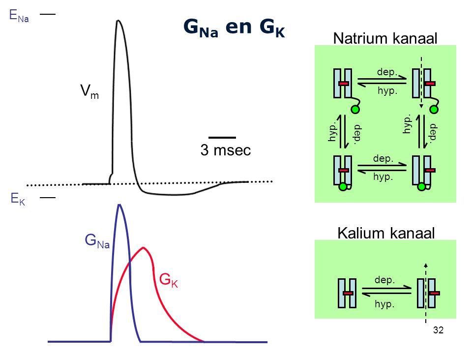 GNa en GK Natrium kanaal Vm 3 msec Kalium kanaal GNa GK ENa EK dep.