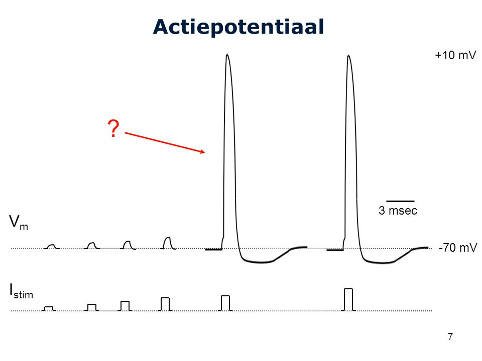 Actiepotentiaal +10 mV 3 msec Vm -70 mV Istim