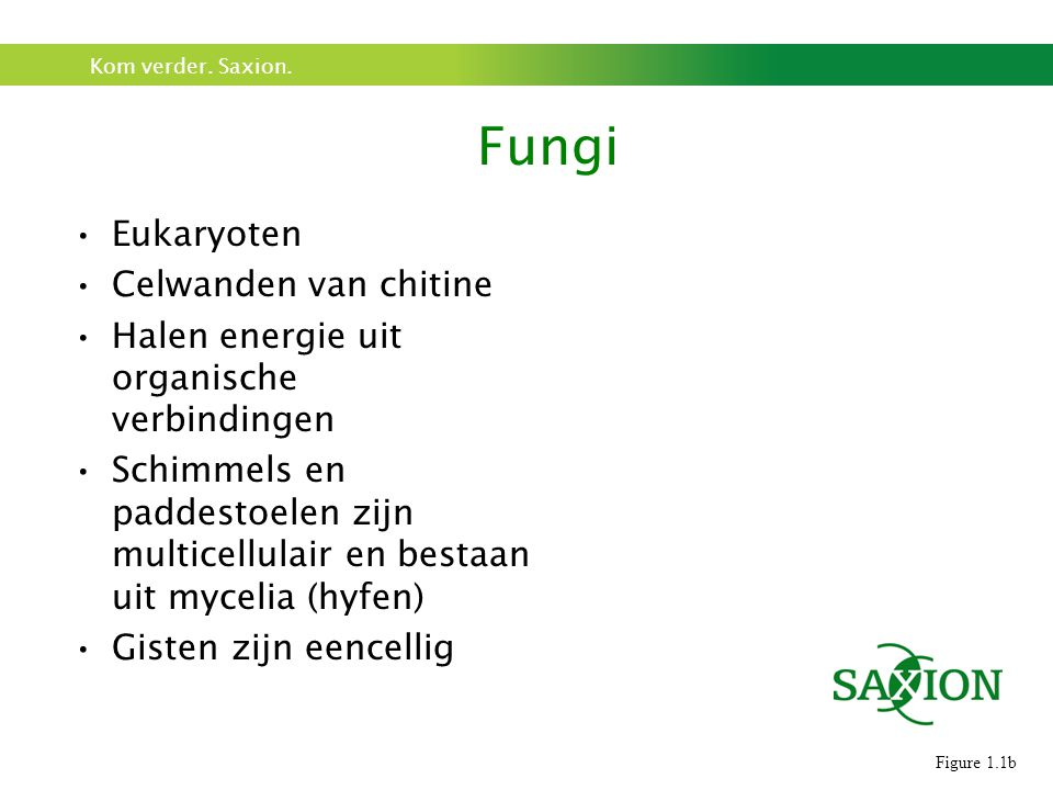 Fungi Eukaryoten Celwanden van chitine