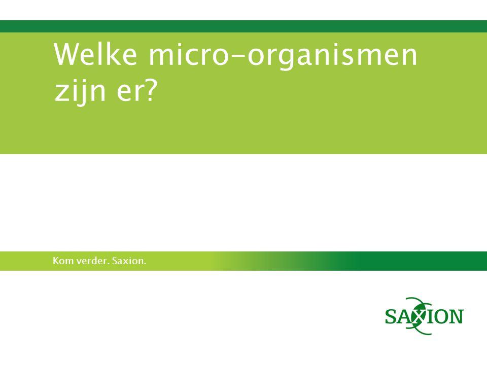 Welke micro-organismen zijn er