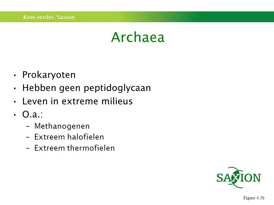 Archaea Prokaryoten Hebben geen peptidoglycaan