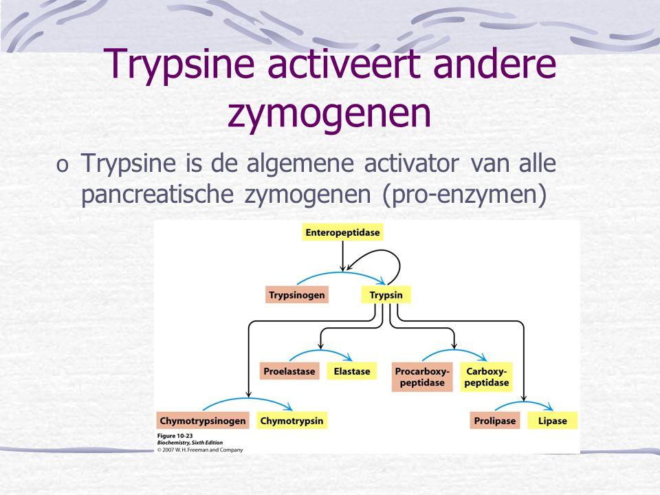Trypsine activeert andere zymogenen