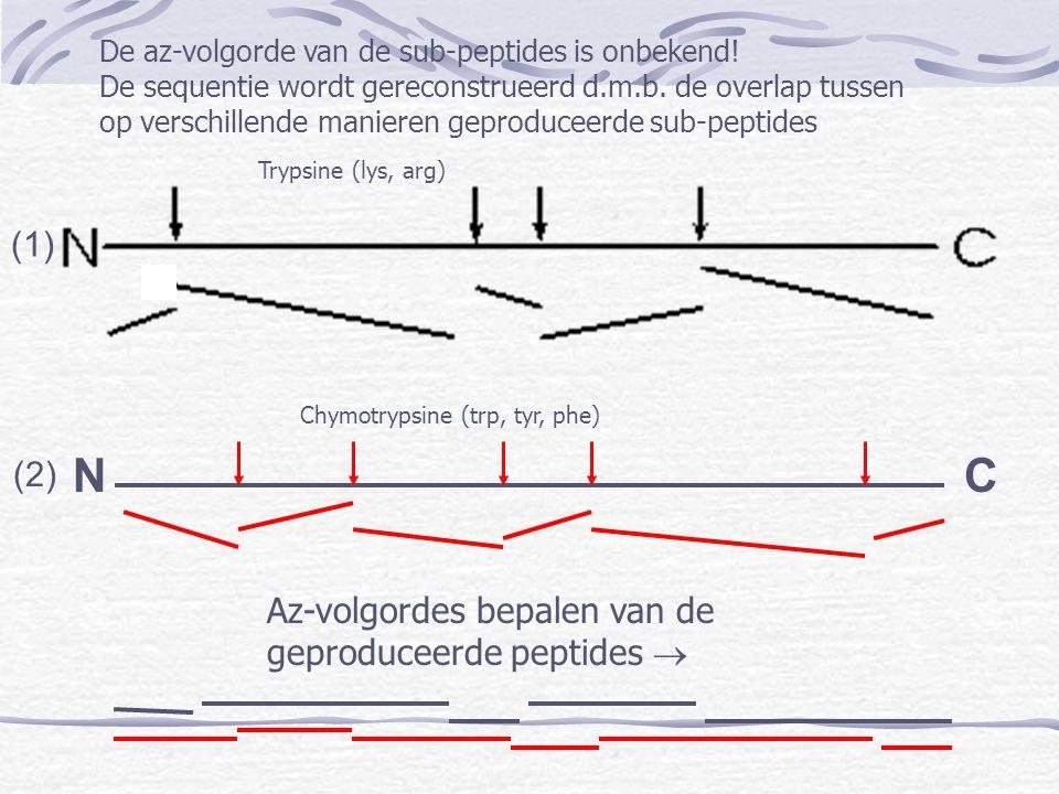 N C (1) (2) Az-volgordes bepalen van de geproduceerde peptides 