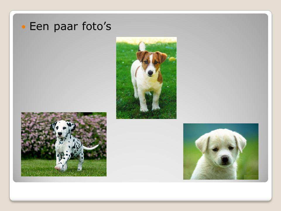 Een paar foto's