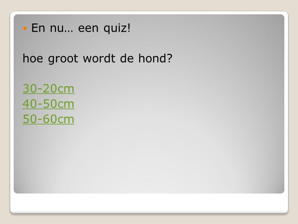 En nu… een quiz! hoe groot wordt de hond 30-20cm 40-50cm 50-60cm