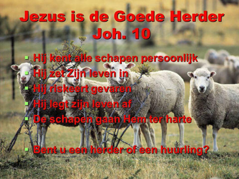 Jezus is de Goede Herder Joh. 10