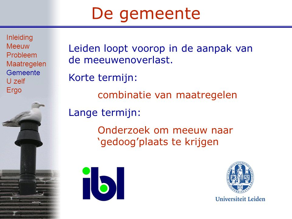 De gemeente Leiden loopt voorop in de aanpak van de meeuwenoverlast.