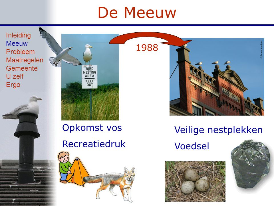 De Meeuw 1988 Opkomst vos Veilige nestplekken Recreatiedruk Voedsel