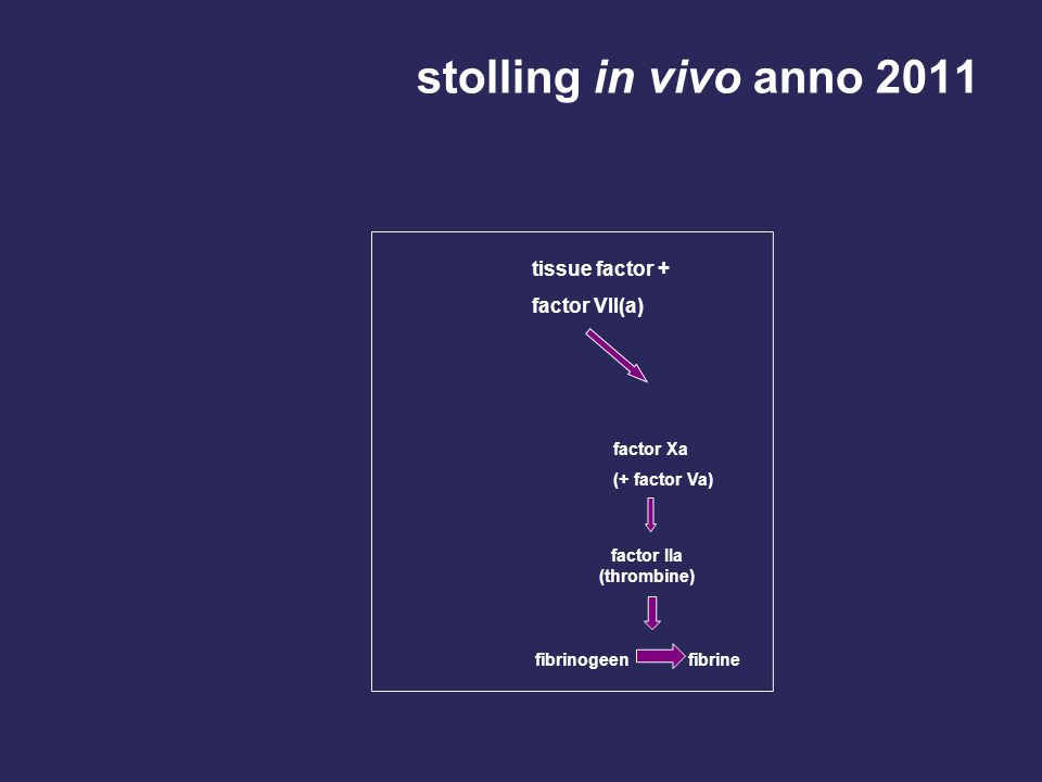 stolling in vivo anno 2011 tissue factor + factor VII(a) factor Xa