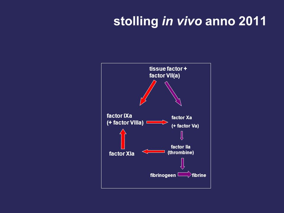 stolling in vivo anno 2011 tissue factor + factor VII(a)