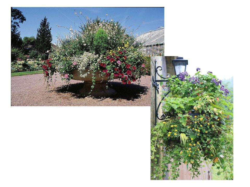 In de botanische tuin van Bayeux een schaal. met eenjarige planten. Maar ook veel Franse dorpen. stellen er eer in om met mooie.