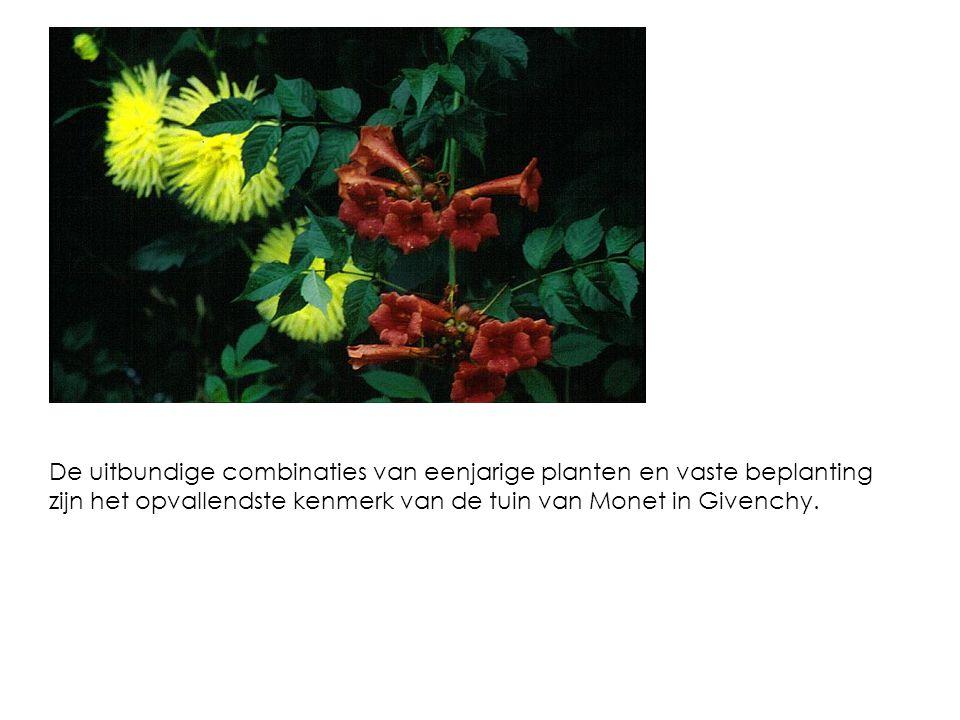 De uitbundige combinaties van eenjarige planten en vaste beplanting