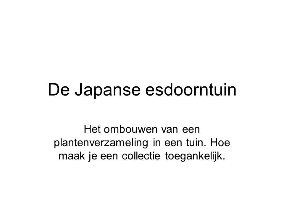 De Japanse esdoorntuin