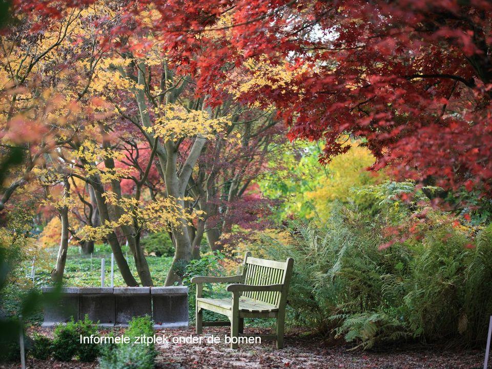 Informele zitplek onder de bomen