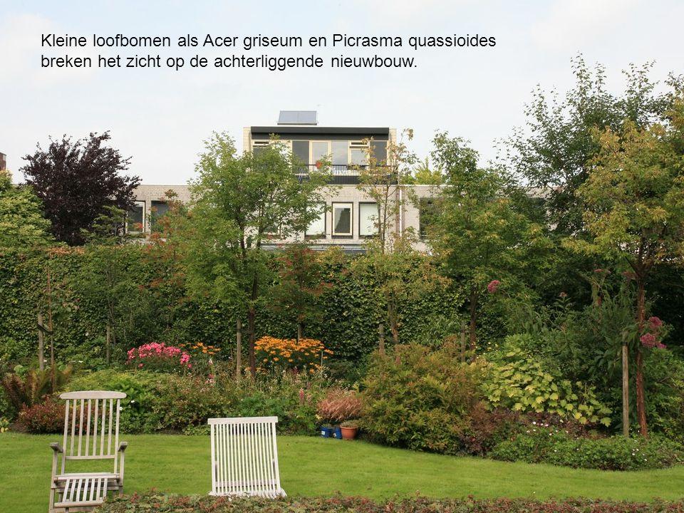 Kleine loofbomen als Acer griseum en Picrasma quassioides