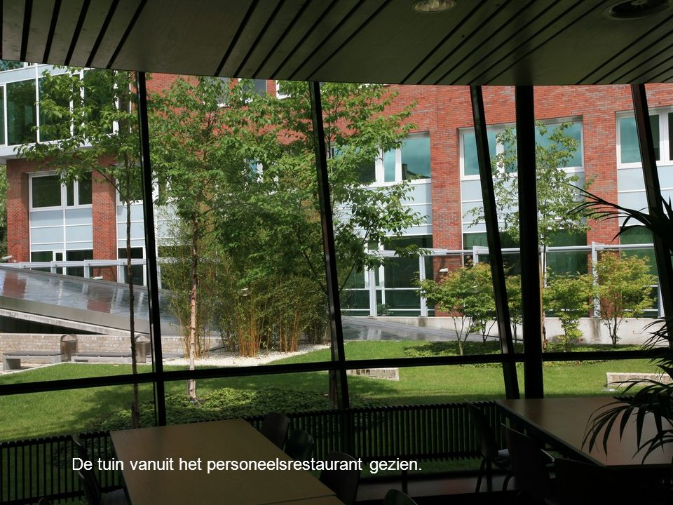 De tuin vanuit het personeelsrestaurant gezien.