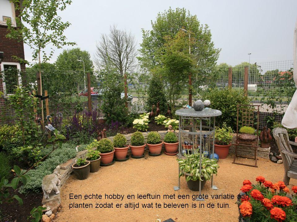Een echte hobby en leeftuin met een grote variatie aan planten zodat er altijd wat te beleven is in de tuin.