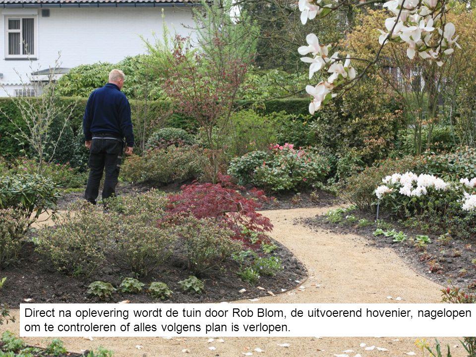 Direct na oplevering wordt de tuin door Rob Blom, de uitvoerend hovenier, nagelopen