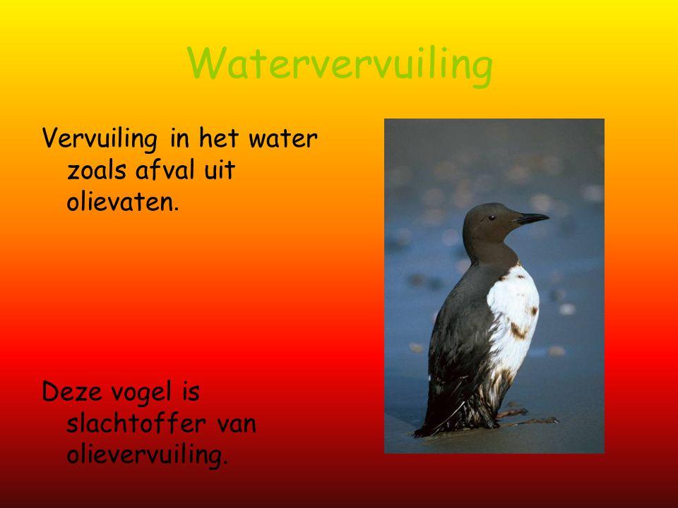 Watervervuiling Vervuiling in het water zoals afval uit olievaten.