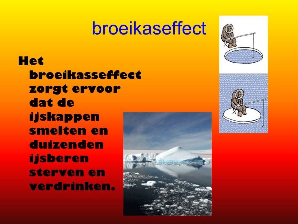 broeikaseffect Het broeikasseffect zorgt ervoor dat de ijskappen smelten en duizenden ijsberen sterven en verdrinken.