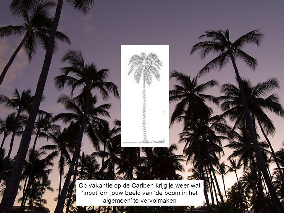 Op vakantie op de Cariben krijg je weer wat 'input' om jouw beeld van 'de boom in het algemeen' te vervolmaken