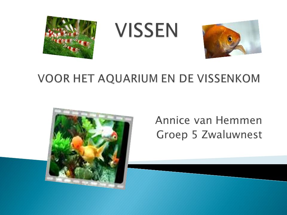 Annice van Hemmen Groep 5 Zwaluwnest