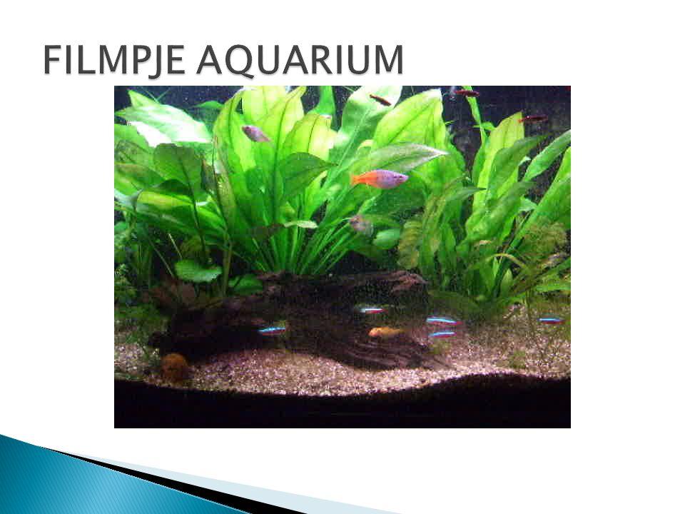 FILMPJE AQUARIUM Dit is een filmpje van een aquarium van vrienden van papa en mama