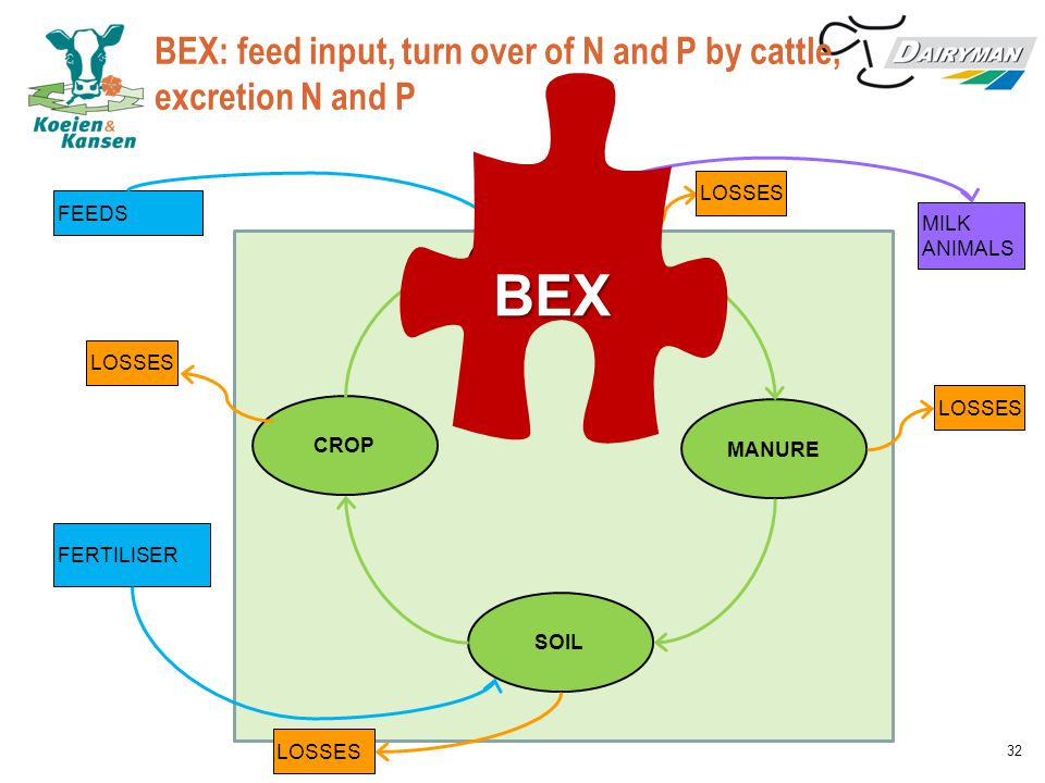 BEX: feed input, turn over of N and P by cattle, excretion N and P