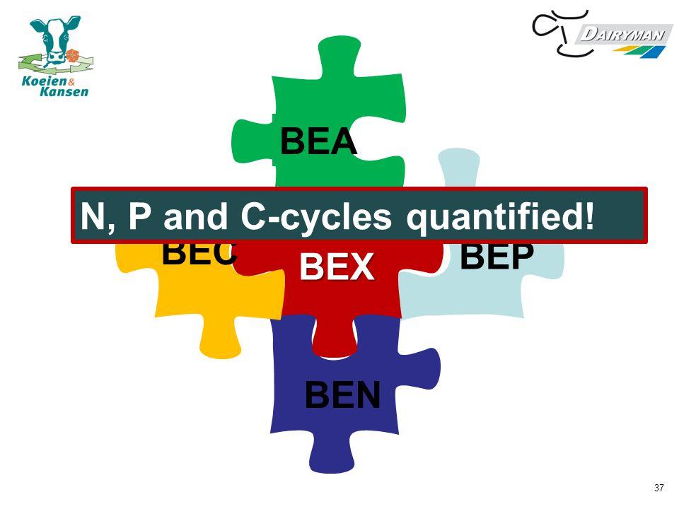 BEA BEP N, P and C-cycles quantified! BEC BEX BEN