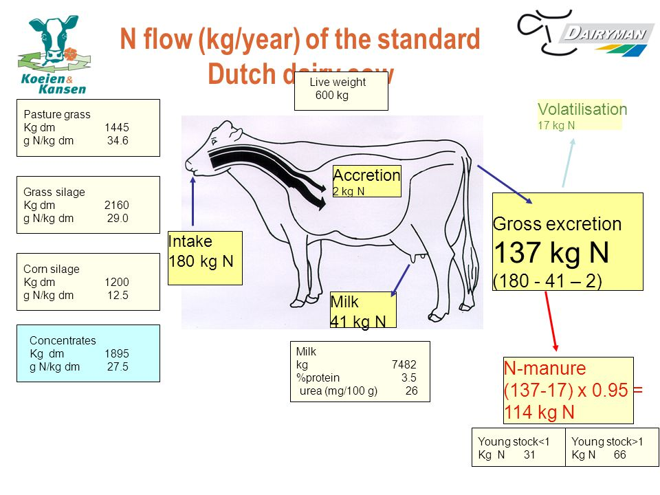 N flow (kg/year) of the standard Dutch dairy cow