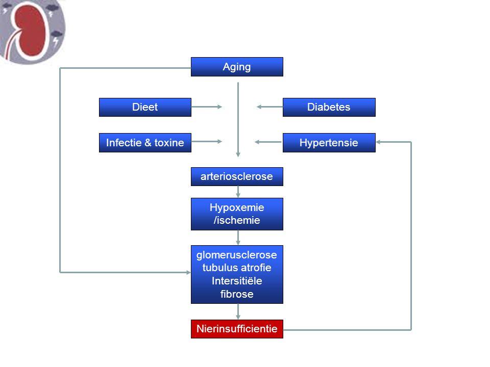 glomerusclerose tubulus atrofie