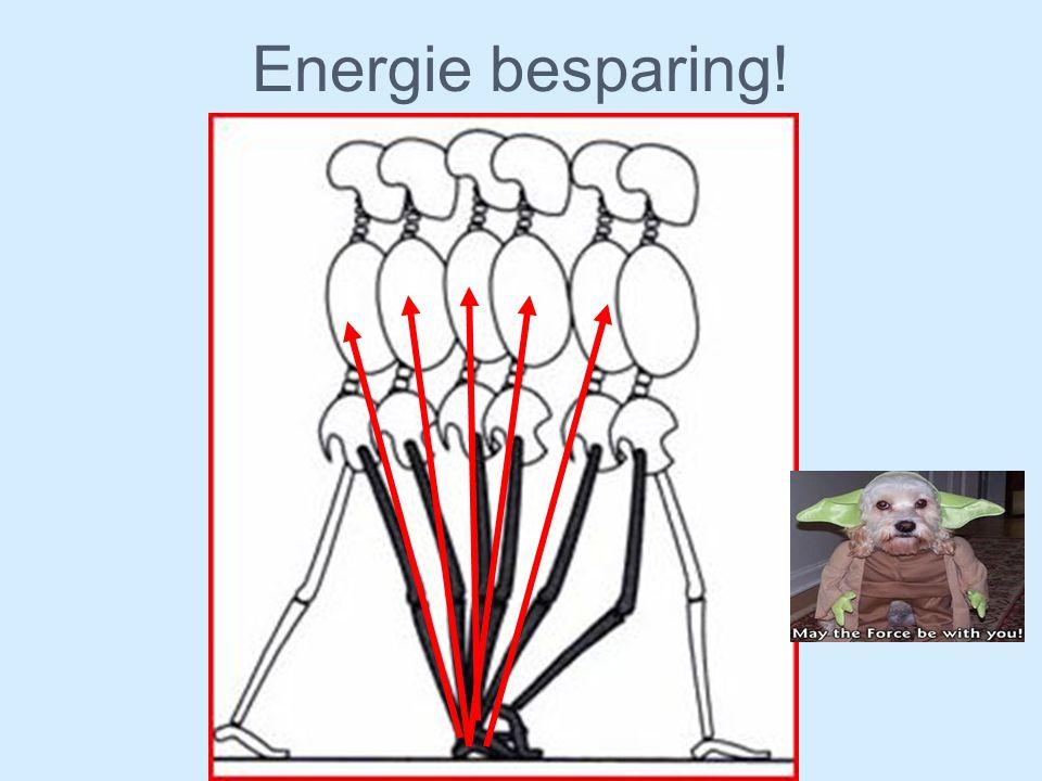 Energie besparing! Het lopen is heel efficient. Er op gemaakt dat wij tijdens het lopen ze veel mogelijk energie moeten sparen.