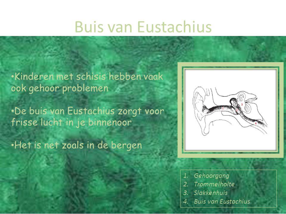 Buis van Eustachius Kinderen met schisis hebben vaak ook gehoor problemen. De buis van Eustachius zorgt voor frisse lucht in je binnenoor.
