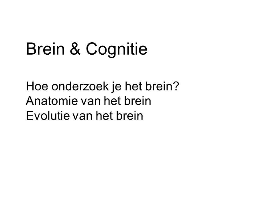 Brein & Cognitie Hoe onderzoek je het brein