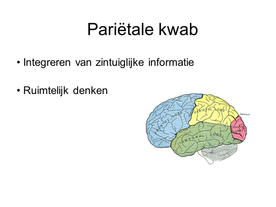 Pariëtale kwab Integreren van zintuiglijke informatie