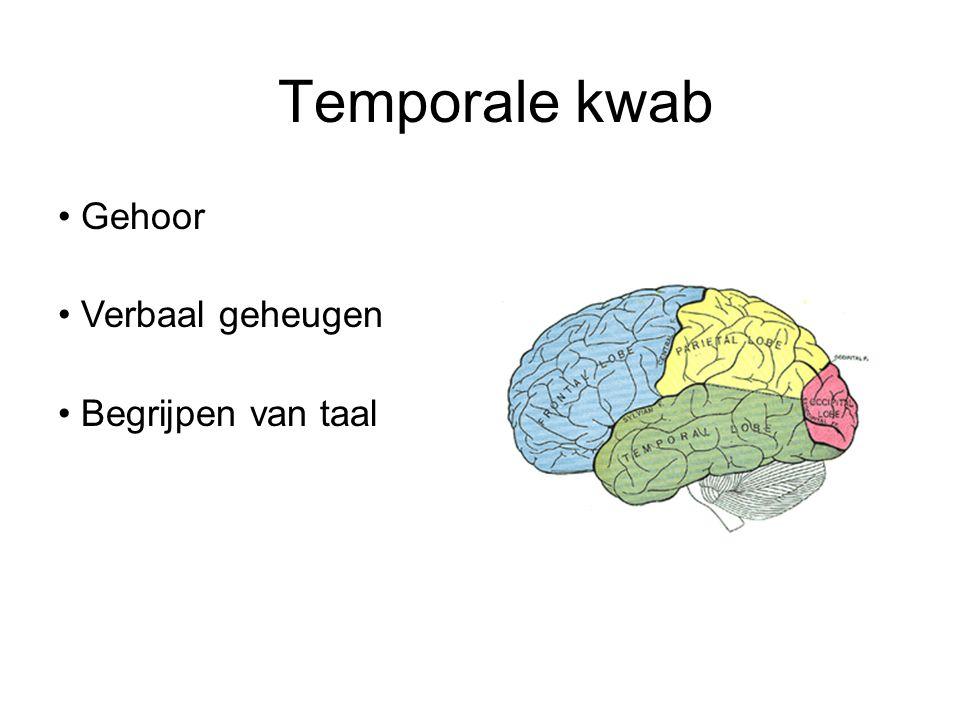 Temporale kwab Gehoor Verbaal geheugen Begrijpen van taal