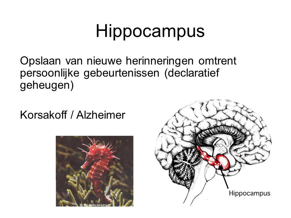 Hippocampus Opslaan van nieuwe herinneringen omtrent persoonlijke gebeurtenissen (declaratief geheugen)