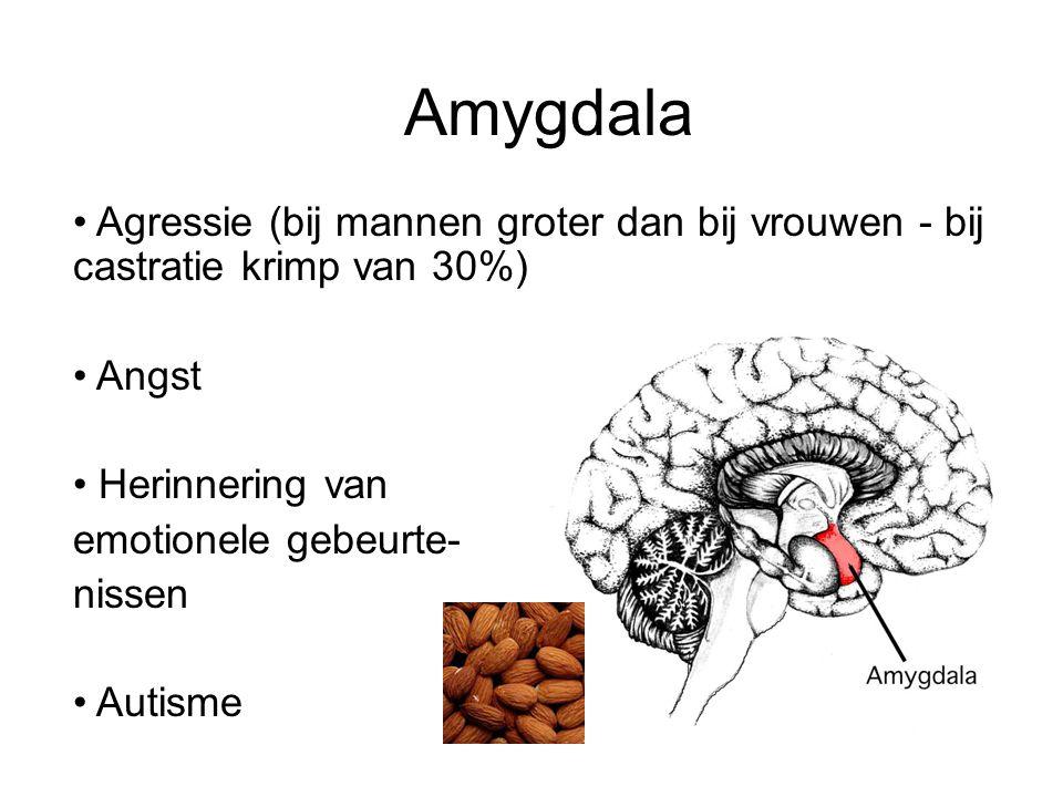 Amygdala Agressie (bij mannen groter dan bij vrouwen - bij castratie krimp van 30%) Angst. Herinnering van.