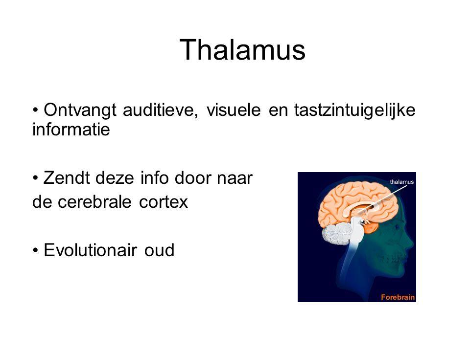 Thalamus Ontvangt auditieve, visuele en tastzintuigelijke informatie