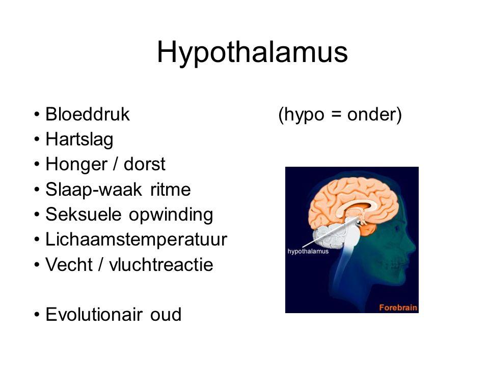 Hypothalamus Bloeddruk (hypo = onder) Hartslag Honger / dorst