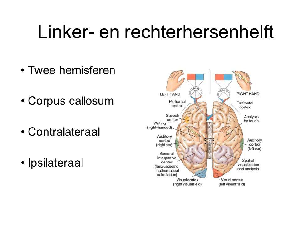 Linker- en rechterhersenhelft