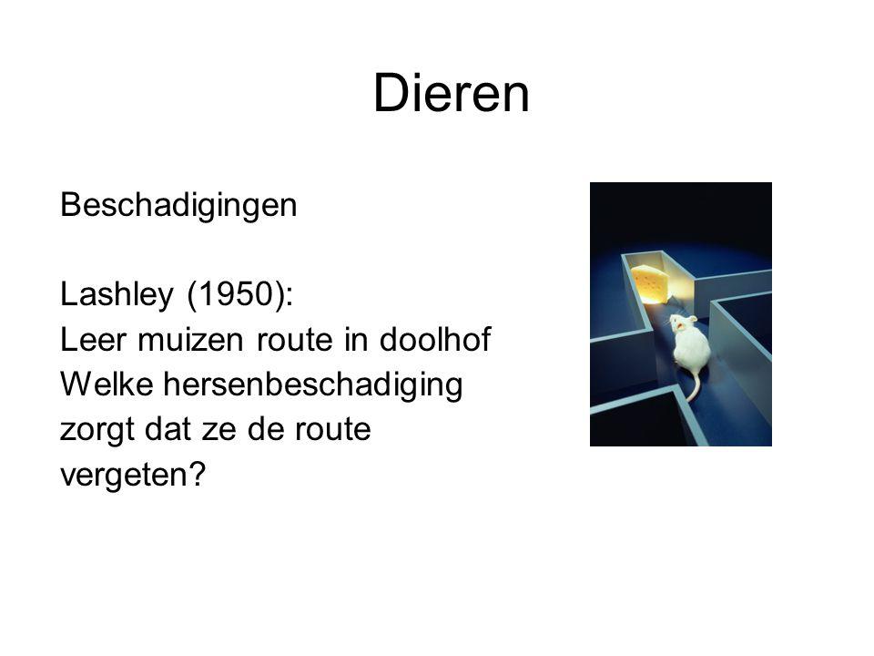 Dieren Beschadigingen Lashley (1950): Leer muizen route in doolhof