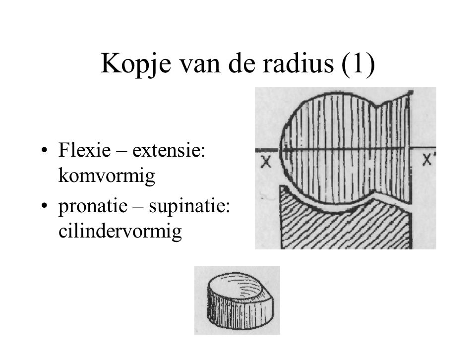 Kopje van de radius (1) Flexie – extensie: komvormig
