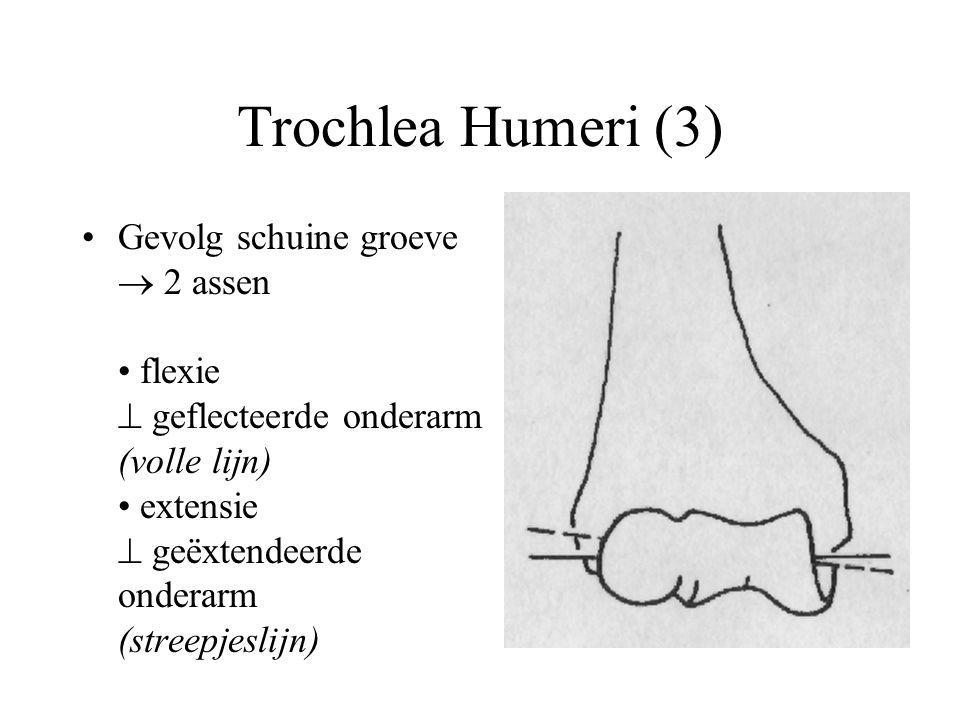 Trochlea Humeri (3)