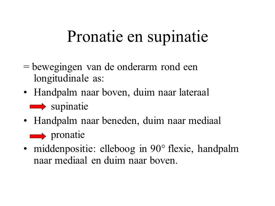 Pronatie en supinatie = bewegingen van de onderarm rond een longitudinale as: Handpalm naar boven, duim naar lateraal.