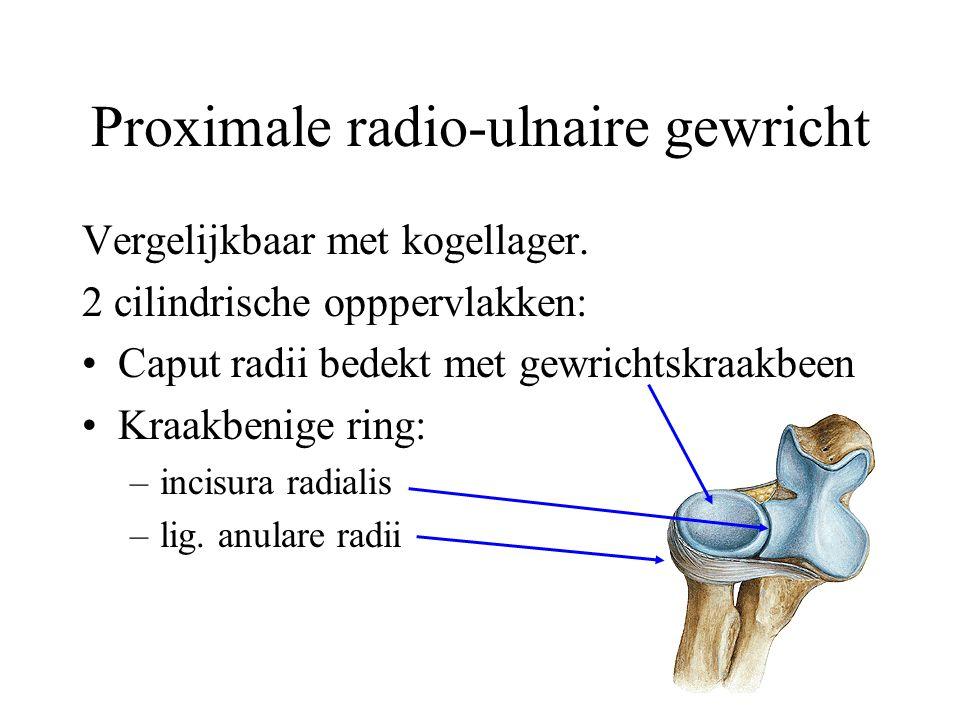 Proximale radio-ulnaire gewricht
