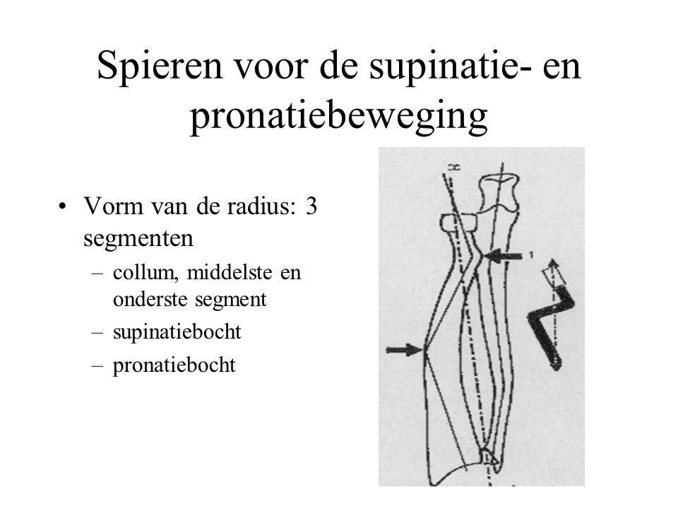 Spieren voor de supinatie- en pronatiebeweging