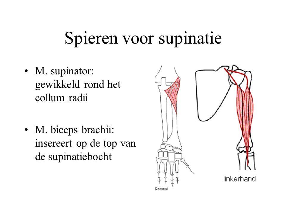 Spieren voor supinatie